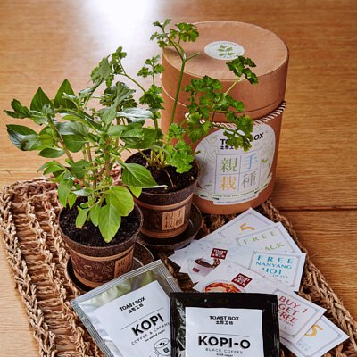 Toast Box | Coffee Grounds Planting Kit