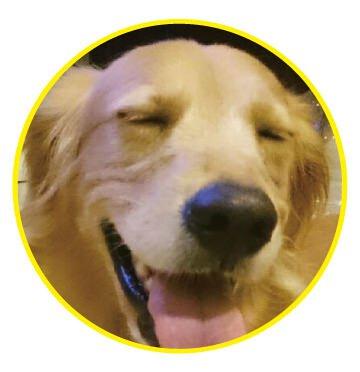 極淨潔耳液的愛用者黃金獵犬:雲林阿金