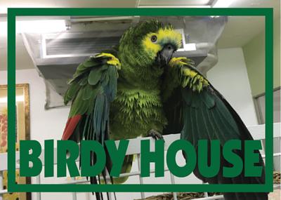 Birdy House