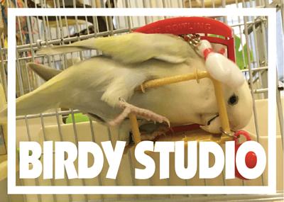 Birdy Srudio