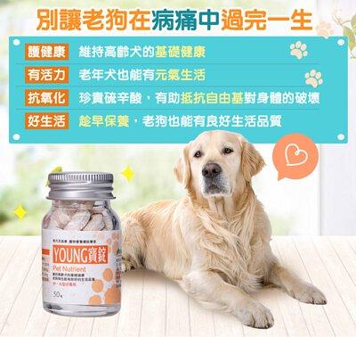 補充抗氧化劑,漾寶讓老狗狗活力滿滿