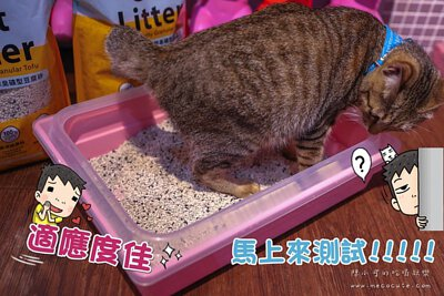 貓咪測試新的貓砂
