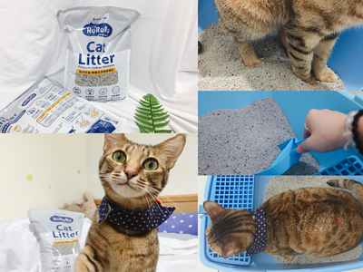 貓咪與礦砂使用介紹