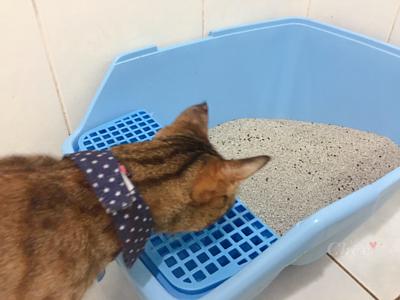 貓咪好奇礦砂