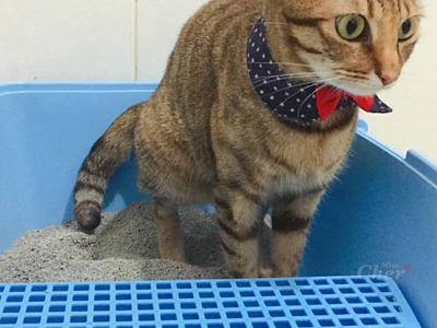 貓咪上廁所