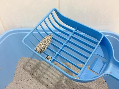 測試貓砂凝結