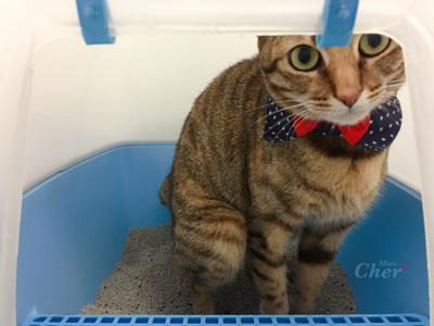 貓咪上廁所被偷看