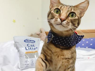 貓咪跟貓砂