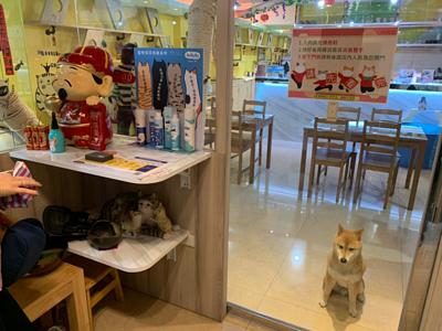 咪可思啾芭店內陳列了HuRuRu寵物系列商品