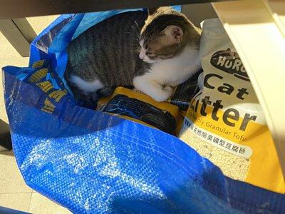 在裝載貓砂的袋子裡睡著的貓咪