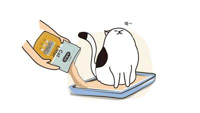 選擇低粉塵貓砂,保護貓咪呼吸道