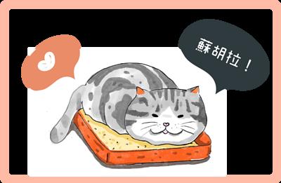 貓咪生活必需品之一就是貓砂及貓砂盆!