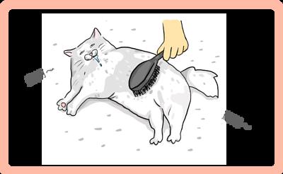 一隻貓咪在梳毛