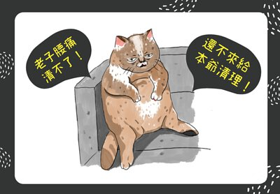 老貓咪需要主人幫他們梳洗