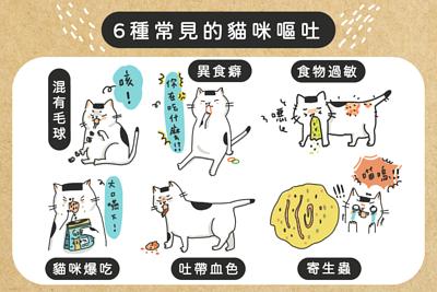 6種常見的貓咪嘔吐