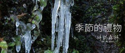 季節的禮物-大雪山神木步道
