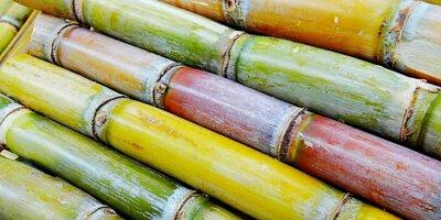 蔗糖的原料:甘蔗