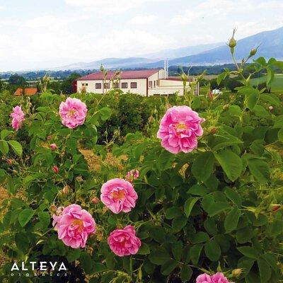保加利亞奧圖玫瑰花水