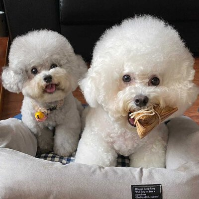 https://www.doggywants.com.tw/products/zongzi-doggywants