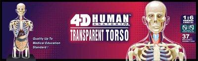 4d,4d master,模型,人體模型,模具,人體解剖,解剖,教具,生物課