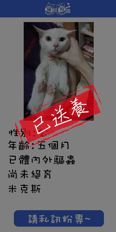 貓咪領養 0985756400