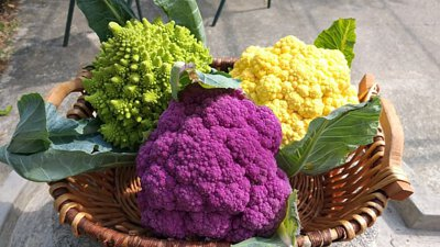 The Colourful Cauliflowers 三種顏色的椰菜花