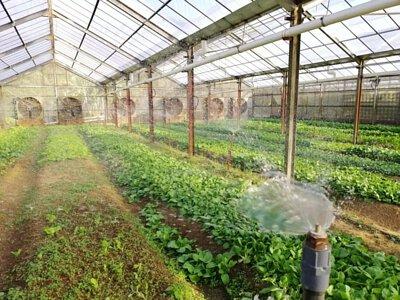 Greenhouse Area 參觀種植棚