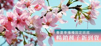 春夏季播種固定班底、暢銷種子新到貨