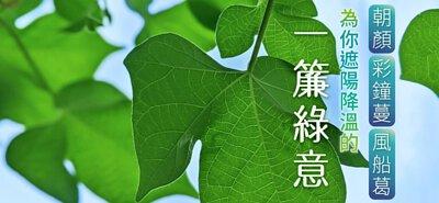 為你遮陽降溫的一簾綠意→朝顏、彩鐘蔓、風船葛