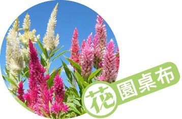 【彩色花塔】羽毛雞冠花 和服:2020年8月桌布
