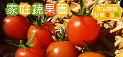 「家庭蔬果園」在家也能體驗採收的食&樂