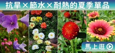 抗旱×節水×耐熱的夏季單品 | iGarden花寶愛花園
