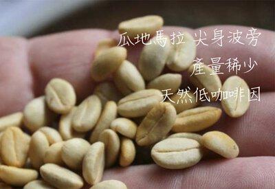 淺中焙|瓜地馬拉  尖身波旁 產量稀少 天然低咖啡因