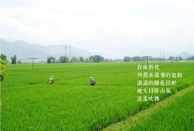 台南新化,所長茶葉蛋的起點,滿滿的綠色田野被大目降山風溫柔吹拂。