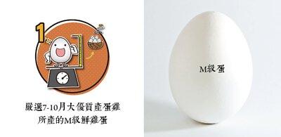 所長茶葉蛋-嚴選7-10個月大最具營養價值且健康的M級雞蛋