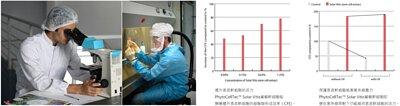 研究圖表,PhytoCellTec™ Solar Vitis葡萄幹細胞,能顯著提升表皮幹細胞的細胞群形成效率,即使在紫外線照射下仍能維持表皮幹細胞的活力