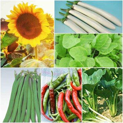 種子,  種植用品, 種植禮品, Seeds, Growing Products, Planting Gifts
