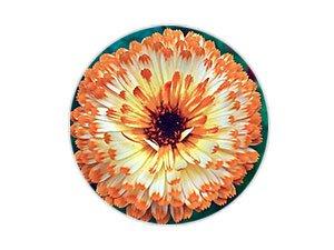 金盞花提取精華,舒緩,鎮定肌膚發紅的不適感,提升肌膚的防禦力