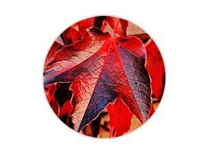 紅葡萄葉/玫瑰/銀杏複合精華,減少紅血絲及蜘蛛網狀的擴張,抑制皮膚持久性發紅,均勻膚色