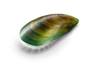 青邊貽貝是紐西蘭純淨海域的特有種,又稱為綠貽貝,含豐富 GAG 醣胺聚醣,是關節滑液所需要的營養成分