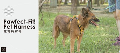 高機能寵物胸背帶,寵物外出適用。