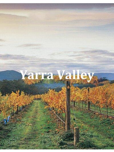 yarravalley,victoria,redwine,australianwine,澳洲酒,紅酒批發,watsonswine,rngwine,chardonnay,pinotnoir,澳洲紅酒,澳洲白酒,wineaustralia