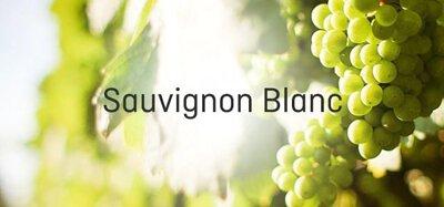 Sauvignon Blanc 長相思