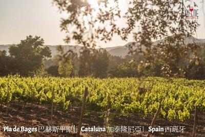 Pla de Bages ,Cataluna