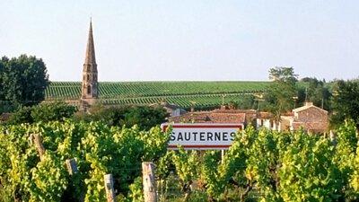 Sauternes, 蘇玳, Noble Wine