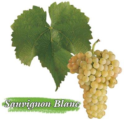 Bordeaux Blanc, 波爾多白酒, Sauvignon blanc ,長相思