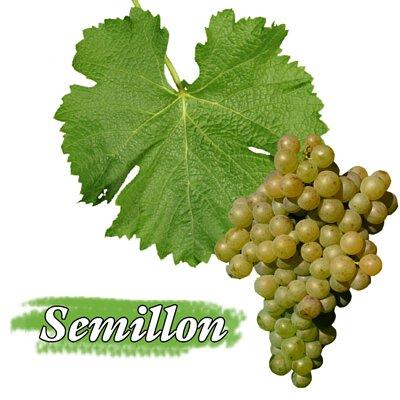 Bordeaux Blanc, 波爾多白酒,Semillon , 賽美蓉)