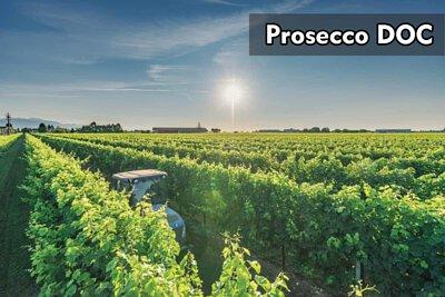 Prosecco DOC|普洛賽克|wine couple|醇酒伴侶