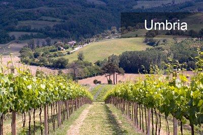 Umbria, 翁布裏亞, Montefalco Sagrantino DOCG, Torgiano Rosso Riserva DOCG, Orvieto DOC, Umbria白葡萄酒
