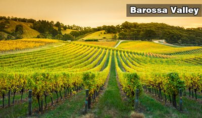 Barossa Valley丨巴羅薩谷丨Wine Couple 醇酒伴侶